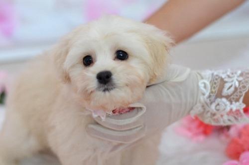 ミックスの子犬(ID:1234911234)の5枚目の写真/更新日:2021-07-08