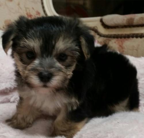 ミックスの子犬(ID:1237811083)の1枚目の写真/更新日:2018-08-27
