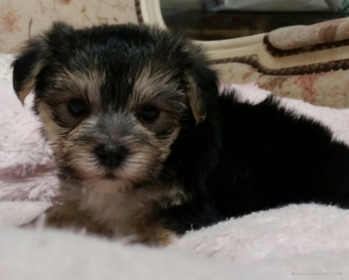 ミックスの子犬(ID:1237811083)の2枚目の写真/更新日:2018-08-27
