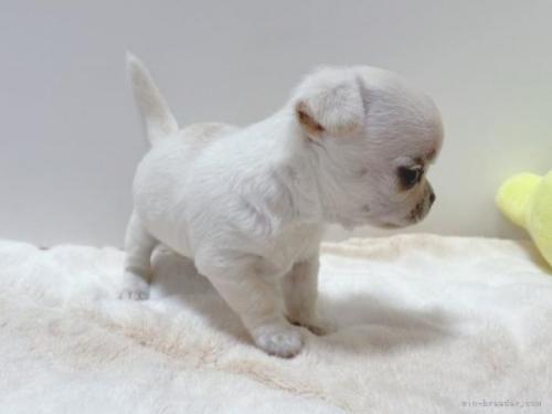 ミックスの子犬(ID:1239111101)の3枚目の写真/更新日:2018-08-15