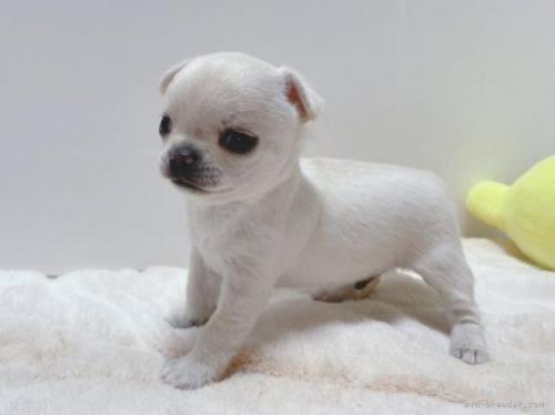 ミックスの子犬(ID:1239111101)の5枚目の写真/更新日:2018-08-15