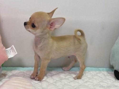 ミックスの子犬(ID:1239111133)の2枚目の写真/更新日:2018-01-08