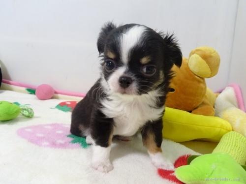 ミックスの子犬(ID:1239111135)の2枚目の写真/更新日:2017-12-14