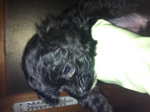 ミックスの子犬(ID:1239711007)の6枚目の写真/更新日:2015-04-15