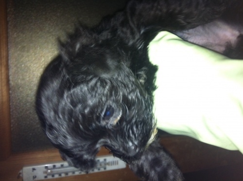 ミックスの子犬(ID:1239711007)の7枚目の写真/更新日:2015-04-15