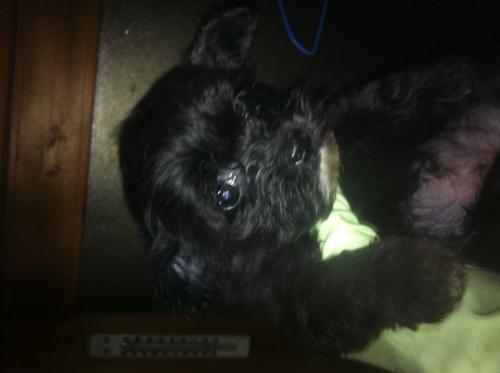 ミックスの子犬(ID:1239711007)の8枚目の写真/更新日:2015-04-15