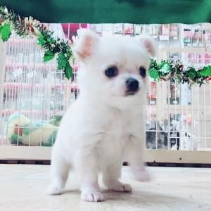 ミックスの子犬(ID:1240211198)の1枚目の写真/更新日:2017-11-10