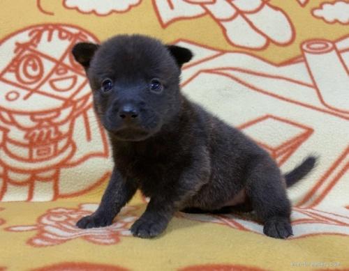 ミックスの子犬(ID:1241011258)の1枚目の写真/更新日:2020-09-19