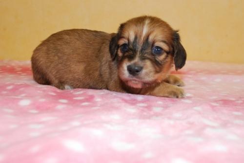ミックスの子犬(ID:1241311044)の2枚目の写真/更新日:2019-08-26