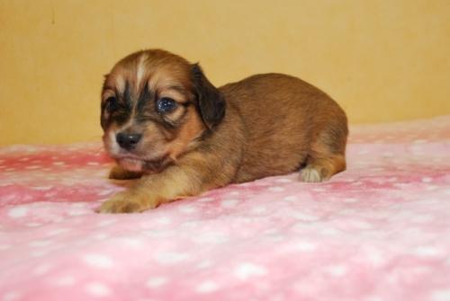 ミックスの子犬(ID:1241311044)の3枚目の写真/更新日:2019-08-26