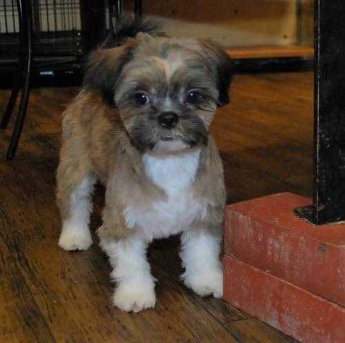 ミックスの子犬(ID:1241311048)の2枚目の写真/更新日:2019-08-26