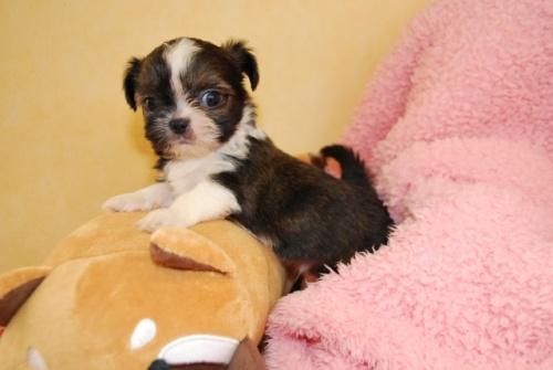 ミックスの子犬(ID:1241311056)の1枚目の写真/更新日:2019-09-15