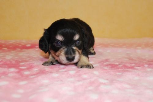 ミックスの子犬(ID:1241311058)の3枚目の写真/更新日:2019-08-26