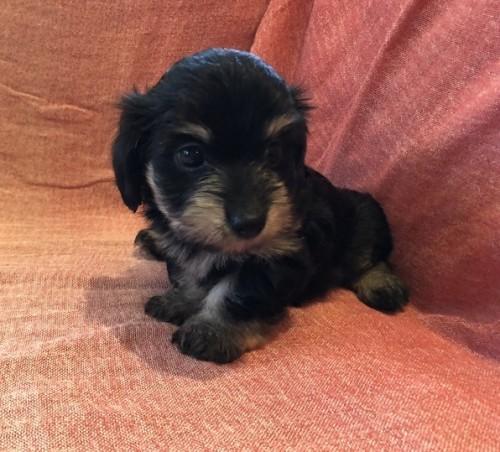ミックスの子犬(ID:1241311227)の2枚目の写真/更新日:2021-08-23