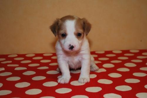 ミックスの子犬(ID:1241311232)の1枚目の写真/更新日:2017-02-13