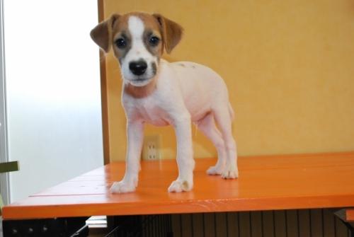 ミックスの子犬(ID:1241311259)の1枚目の写真/更新日:2017-07-10