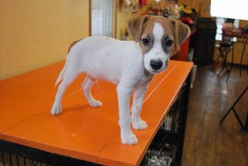 ミックスの子犬(ID:1241311259)の2枚目の写真/更新日:2017-07-10