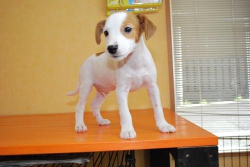 ミックスの子犬(ID:1241311260)の2枚目の写真/更新日:2017-07-10