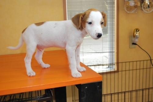 ミックスの子犬(ID:1241311260)の3枚目の写真/更新日:2017-07-10