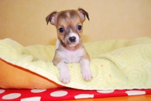 ミックスの子犬(ID:1241311277)の1枚目の写真/更新日:2017-09-01