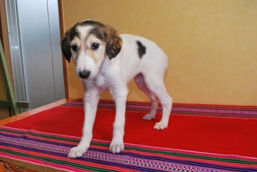 ミックスの子犬(ID:1241311305)の2枚目の写真/更新日:2018-01-09