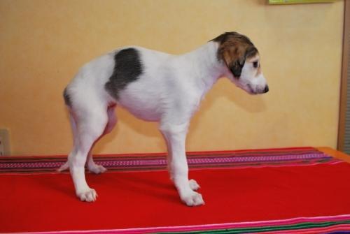 ミックスの子犬(ID:1241311305)の3枚目の写真/更新日:2018-01-09