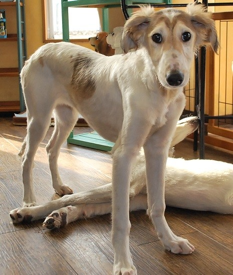 ミックスの子犬(ID:1241311334)の1枚目の写真/更新日:2018-04-19