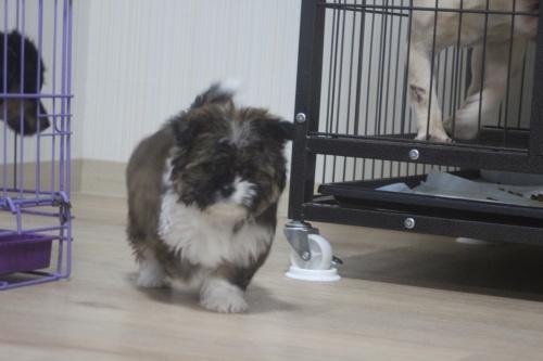 ミックスの子犬(ID:1243411110)の6枚目の写真/更新日:2019-01-12