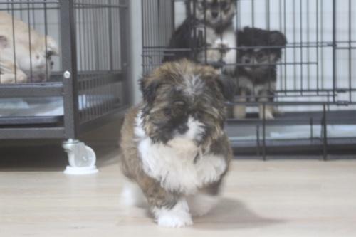 ミックスの子犬(ID:1243411110)の7枚目の写真/更新日:2019-01-12