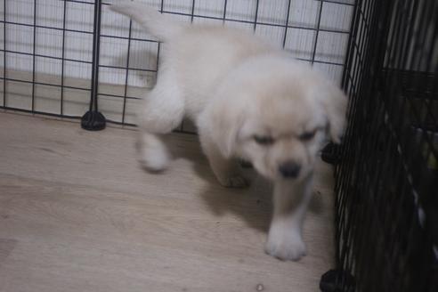 ミックスの子犬(ID:1243411137)の2枚目の写真/更新日:2021-04-09