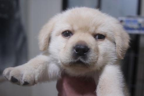 ミックスの子犬(ID:1243411137)の4枚目の写真/更新日:2021-04-09