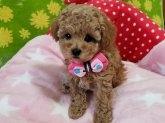 ミックスの子犬(ID:1245711051)の2枚目の写真/更新日:2018-07-05