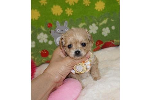 ミックスの子犬(ID:1245711068)の1枚目の写真/更新日:2018-07-05