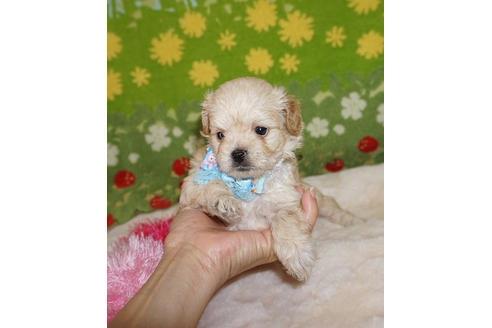ミックスの子犬(ID:1245711093)の1枚目の写真/更新日:2018-07-05