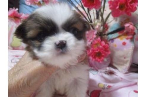 ミックスの子犬(ID:1247311068)の1枚目の写真/更新日:2021-02-19