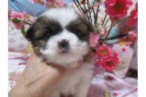 ミックスの子犬(ID:1247311068)の2枚目の写真/更新日:2017-04-24