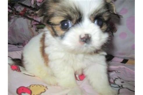ミックスの子犬(ID:1247311068)の3枚目の写真/更新日:2017-04-24