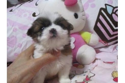 ミックスの子犬(ID:1247311068)の4枚目の写真/更新日:2017-04-24