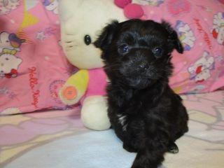 ミックスの子犬(ID:1247311071)の1枚目の写真/更新日:2017-03-20