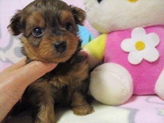 ミックスの子犬(ID:1247311084)の2枚目の写真/更新日:2017-05-11