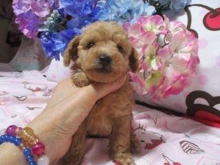 ミックスの子犬(ID:1247311088)の1枚目の写真/更新日:2017-05-11