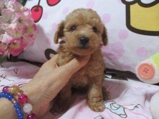 ミックスの子犬(ID:1247311088)の3枚目の写真/更新日:2017-05-11