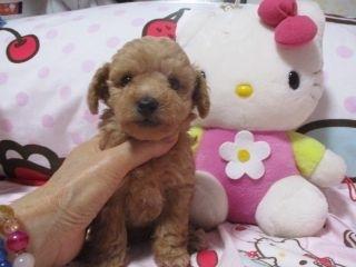 ミックスの子犬(ID:1247311088)の4枚目の写真/更新日:2017-05-11
