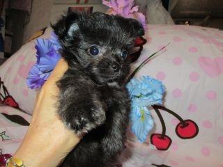 ミックスの子犬(ID:1247311109)の1枚目の写真/更新日:2018-04-23