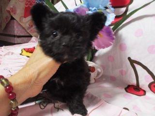 ミックスの子犬(ID:1247311110)の2枚目の写真/更新日:2018-04-20