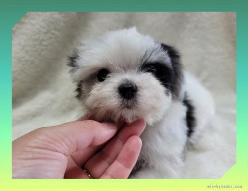 ミックスの子犬(ID:1248211134)の1枚目の写真/更新日:2021-08-23
