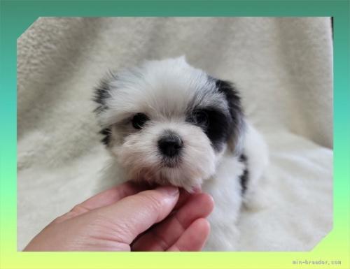 ミックスの子犬(ID:1248211134)の2枚目の写真/更新日:2021-08-23