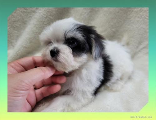 ミックスの子犬(ID:1248211134)の3枚目の写真/更新日:2021-08-23