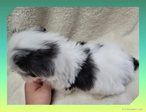 ミックスの子犬(ID:1248211134)の4枚目の写真/更新日:2021-08-23