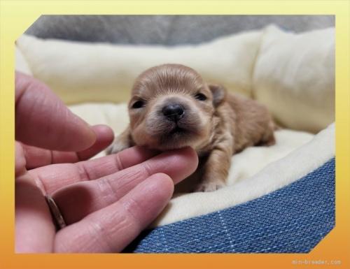 ミックスの子犬(ID:1248211136)の1枚目の写真/更新日:2021-08-12